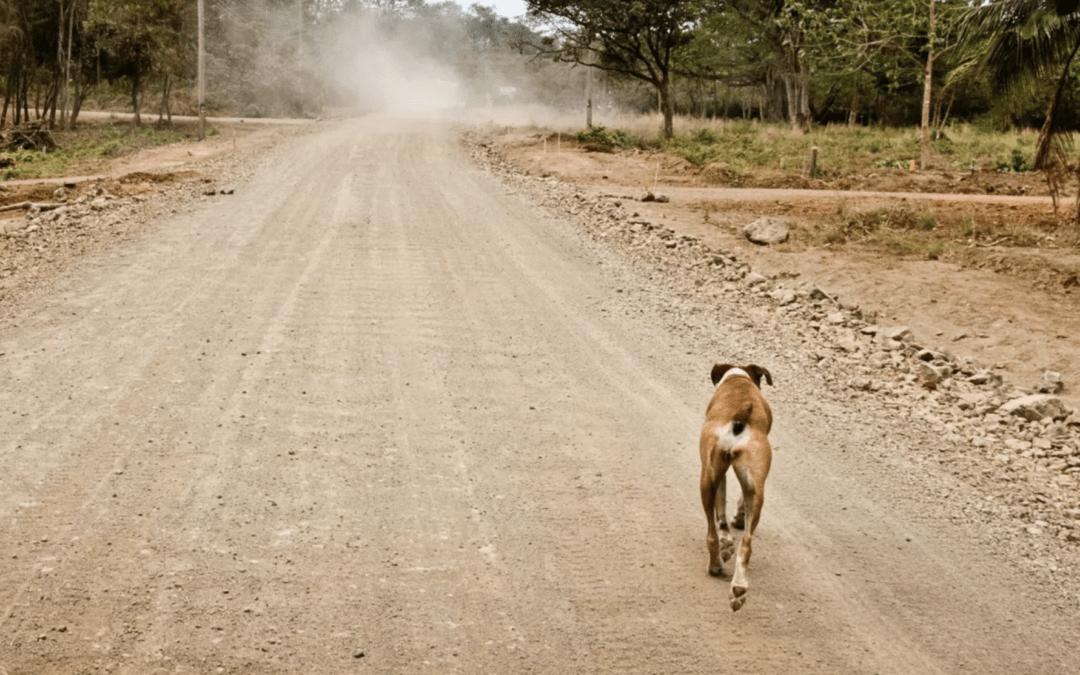 Kako se zaštititi od psa tokom treninga